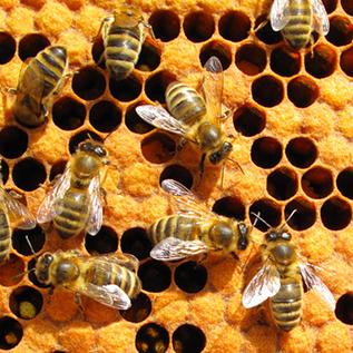 Bild: Bienenwaben